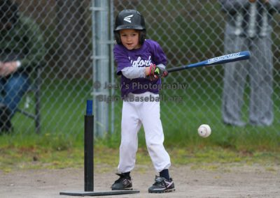 Tball-Purple-3161